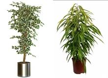 Plante, flore